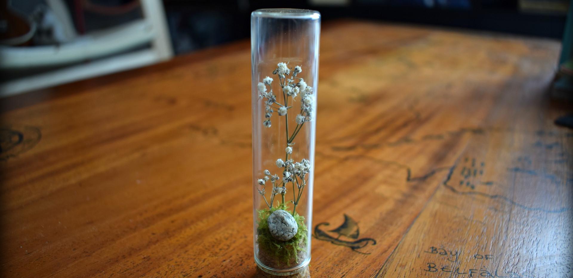 Digressions fleuries