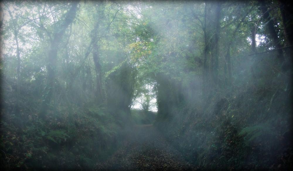 Au détour d'un sentier forestier, ne vous laissez pas attraper par le petit peuple!