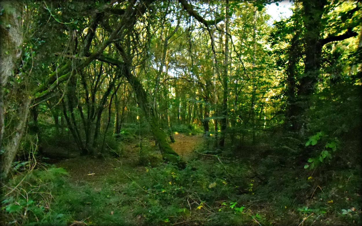 Laissez-vous envoûter par la forêt de Brocéliande...