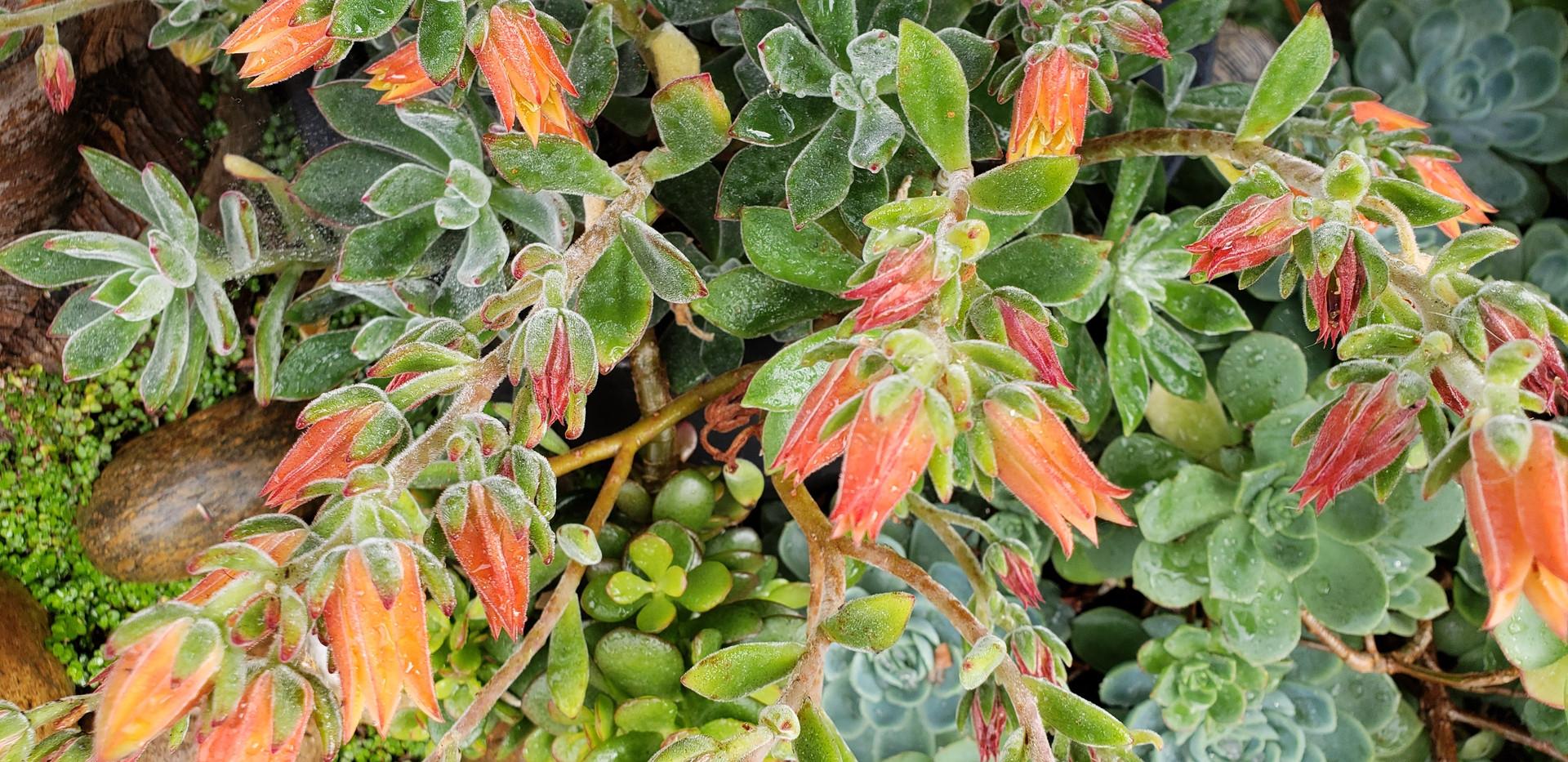 succulent 5.jp