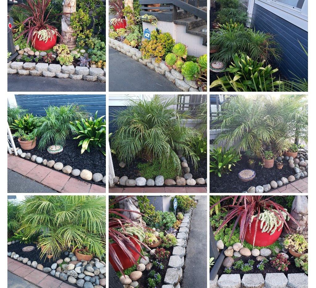 succulent-COLLAGE.jpg
