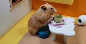 DIY hamster snack: How To Make A Kiwi Cake For Hamsters