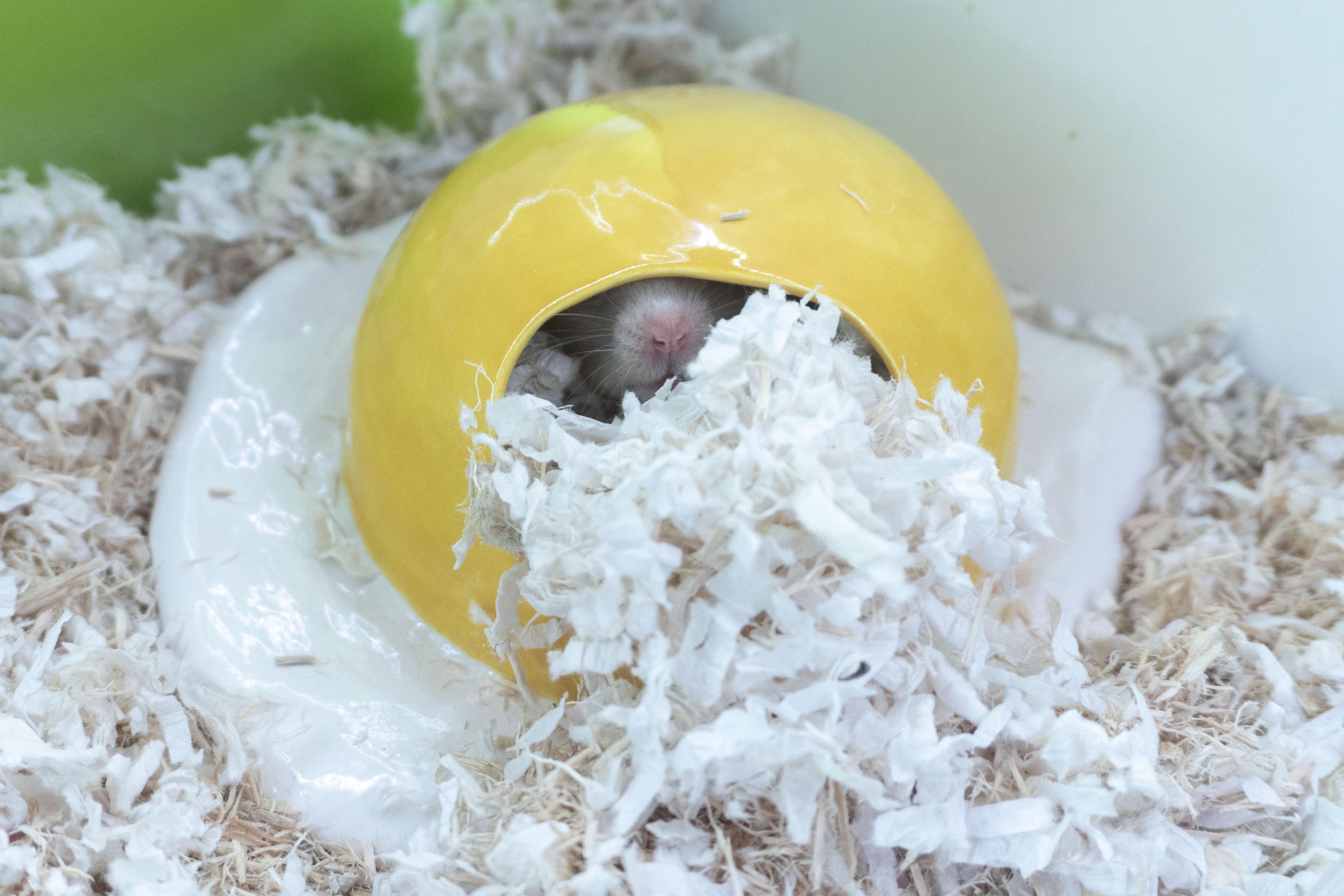 Egg House 7