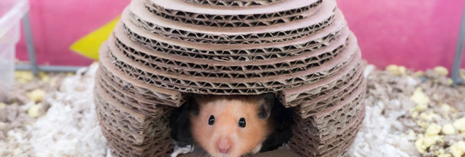 DIY Cardboard Beehive Hamster House