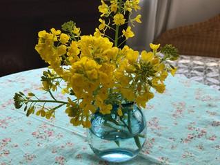 小道具 菜の花