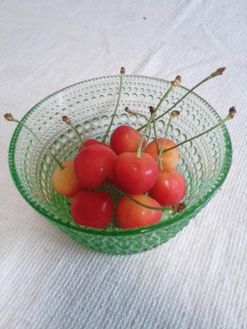小道具 リンゴとサンスベリア