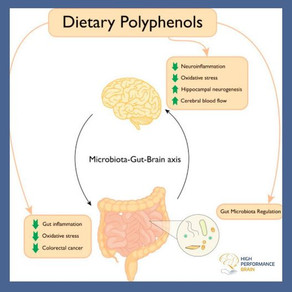 Polyphenols beneficially affect human brain function.