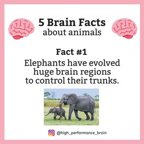 5 Brain Facts about animals