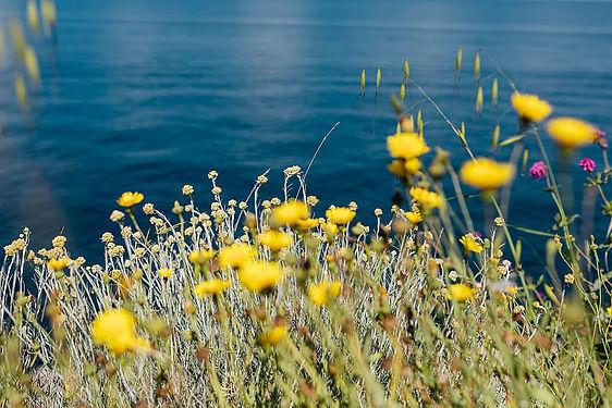 coast_flowers2.jpg