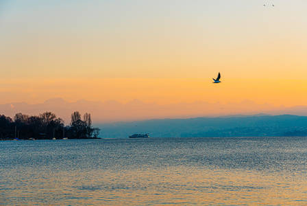 sunset_Zürisee.jpg