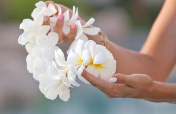 White plumeria flower lei