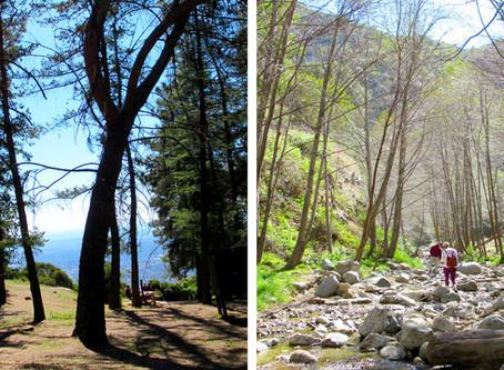 Eaton Canyon Falls to Henninger Flats Hike