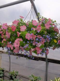 hanging basket 1