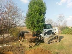 tree install