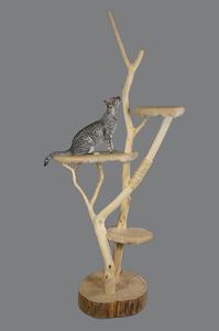 Cat sitter in Darlington, MD