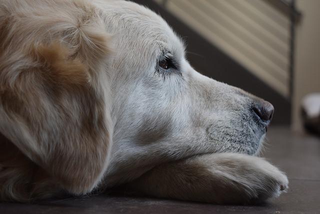 Dog Sitter in Churchville, MD