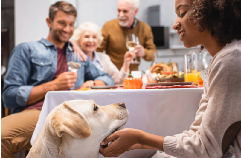 Your Pet AuPair writes about pets and food safety during the holidays.