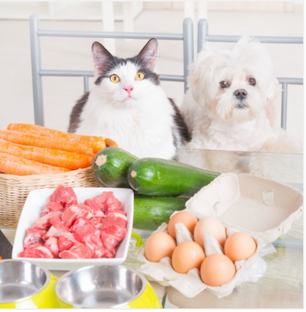 Pros of feeding your pet raw