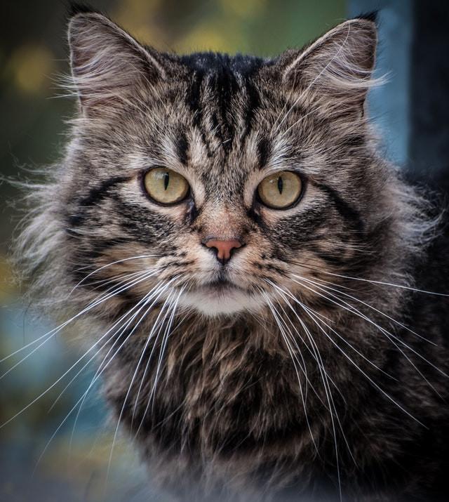 Bel Air MD cat sitter