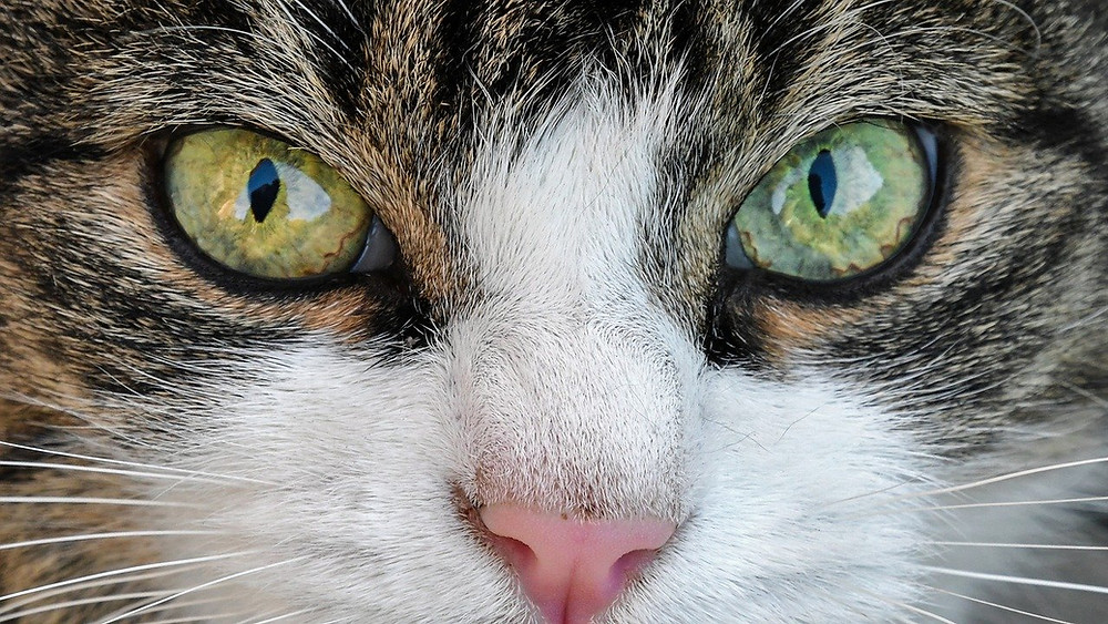 Bel Air cat sitter