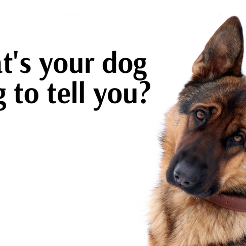 What's Your Dog Trying to Tell You?