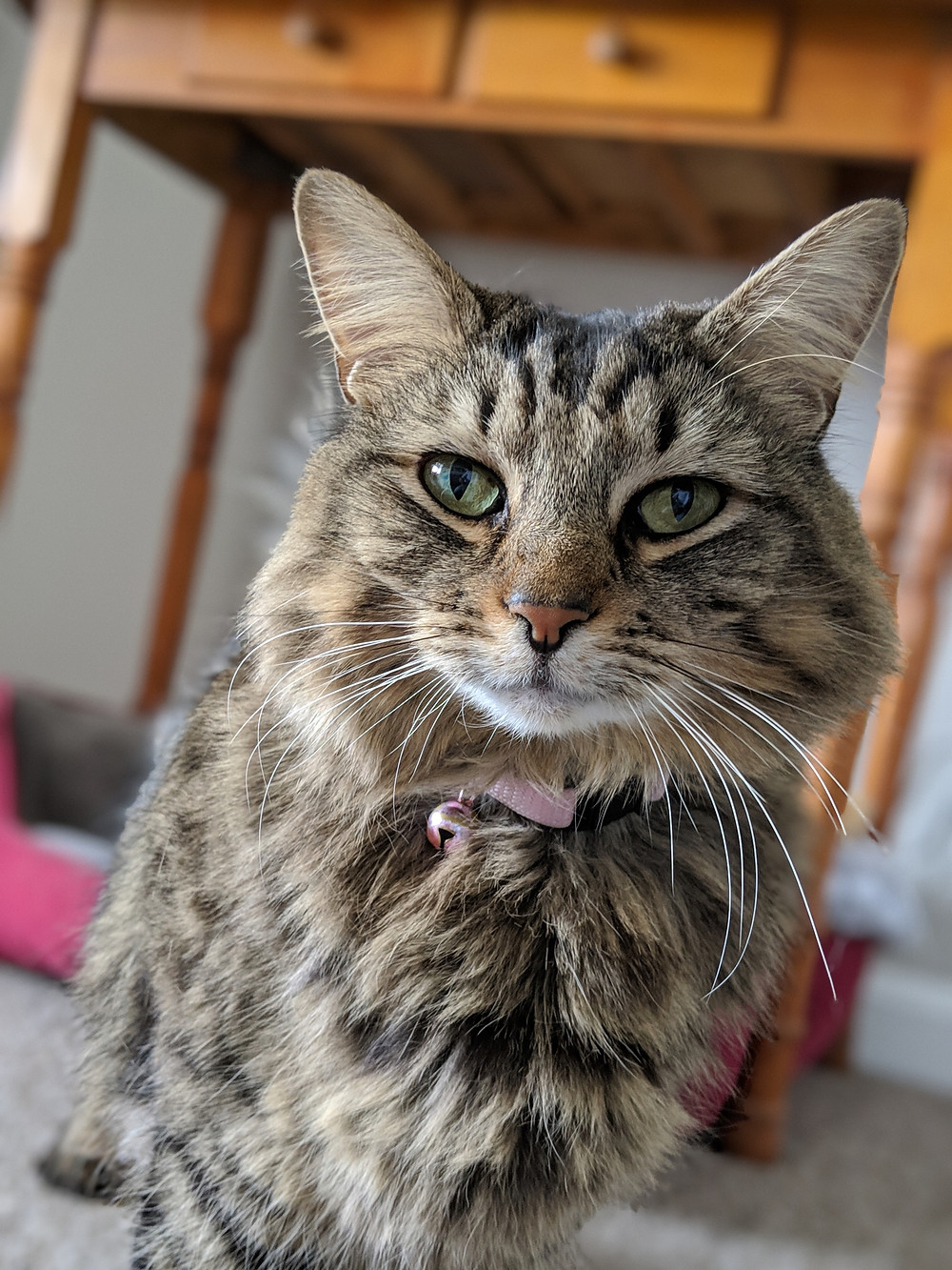 Cat Sitter in Forest Hill