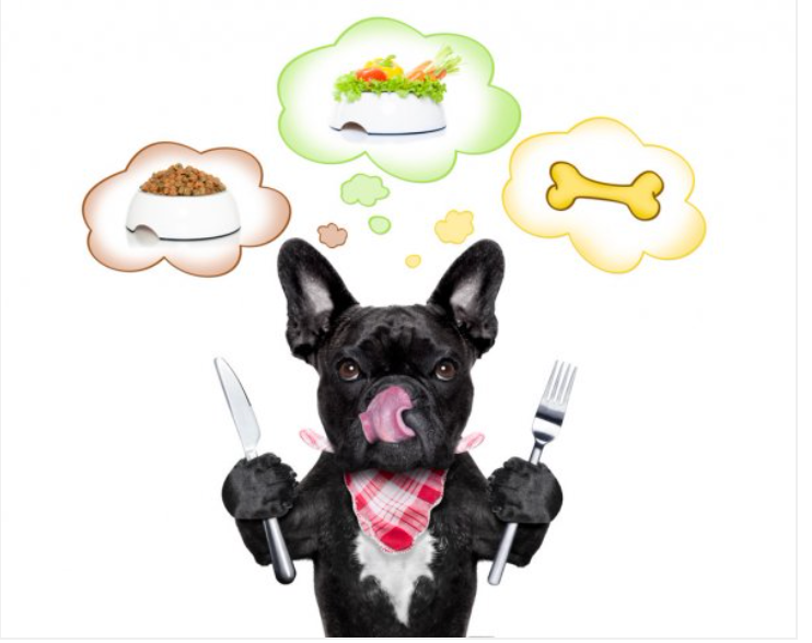 Your Pet AuPair discusses pros & cons of raw diets