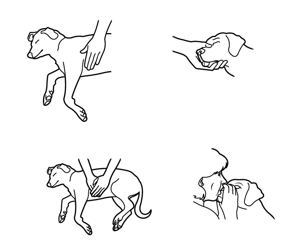 Pet CPR Certified Dog walker in Bel Air, MD