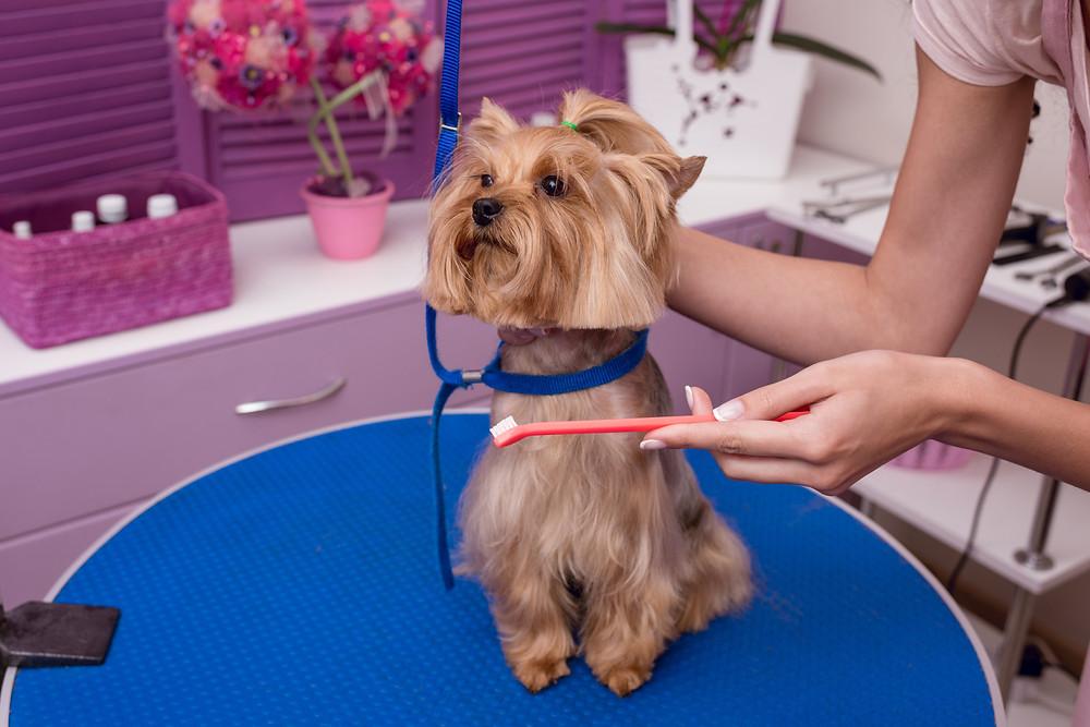 Bel Air dog walker