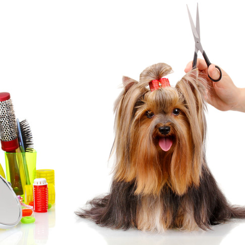 Grooming Your Pet At Home