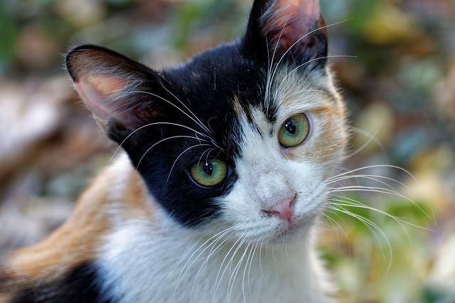 Cat sitting in Bel Air MD