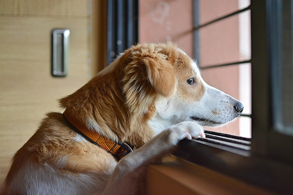 Dog Sitter in Bel Air, MD