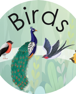 M17 Birds Booklet ID.png