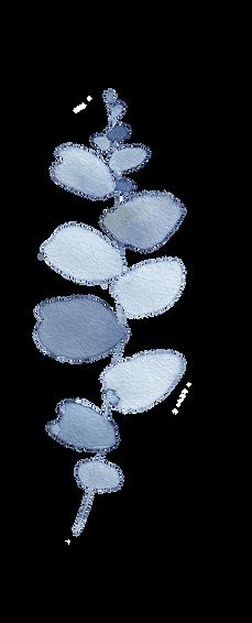 Blue Eucalyptus3.png