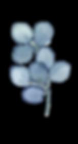 Blue Eucalyptus2.png