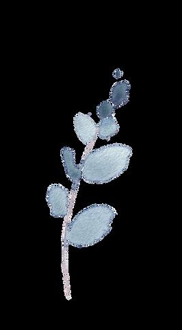 Blue Eucalyptus5.png