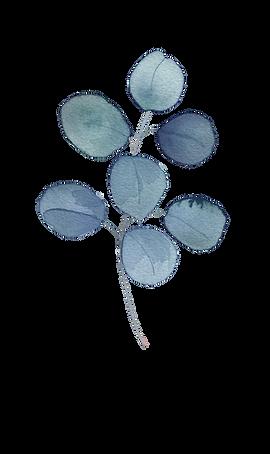 Blue Eucalyptus1.png