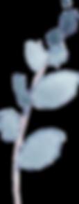 Blue Eucalyptus5-No Border.png