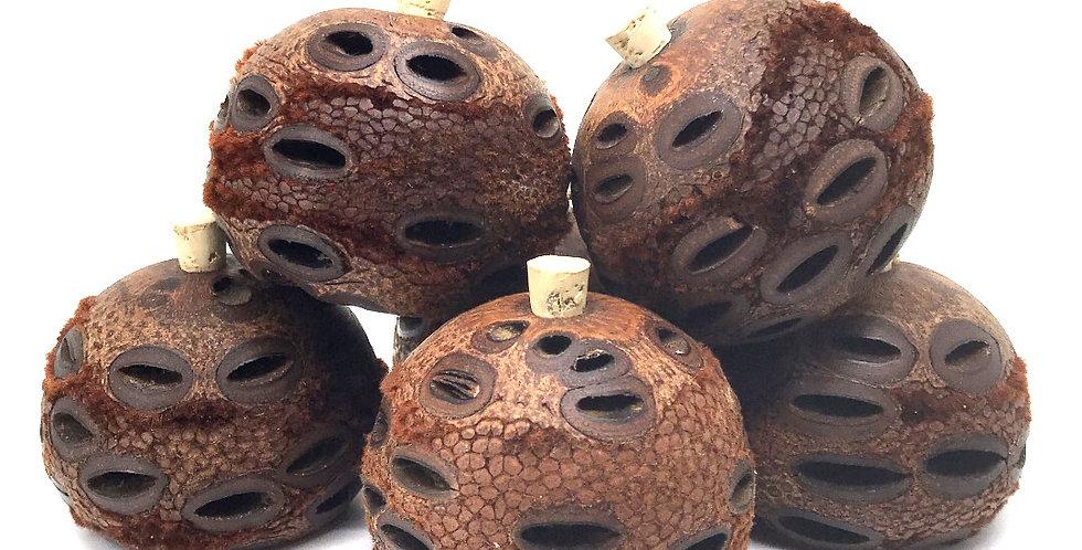 Banksia Scent Pod - Loose