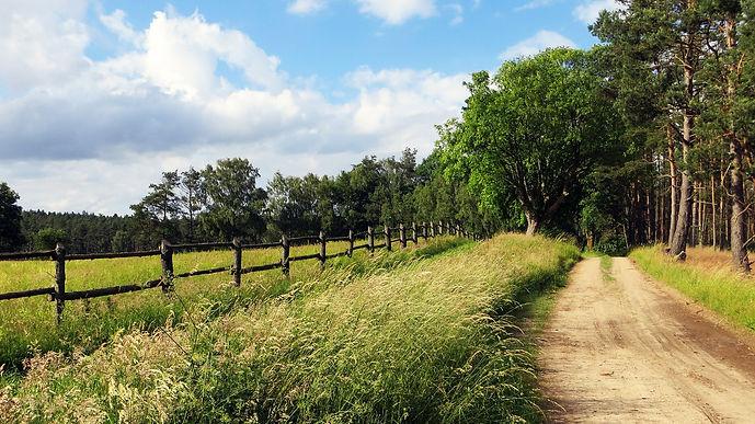 green lane on edge of woodland.