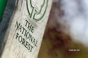 National Forest Trail