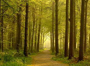 woodland path through dappled forest in National Forest by ben