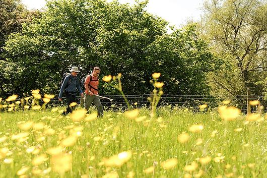 National Forest Walking Festival1 Credit