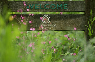 welcome sign in national forest