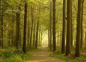 National Forest Treeline