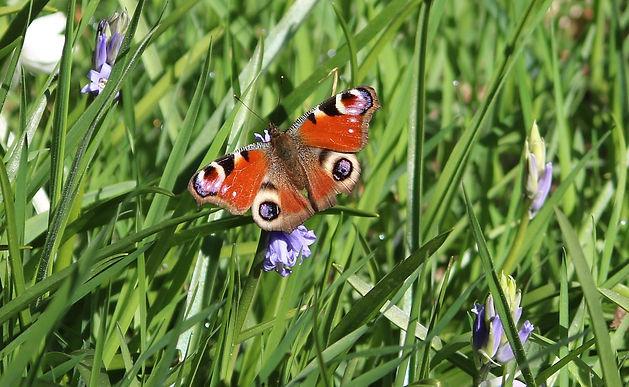 butterfly-1372535_1280.jpg