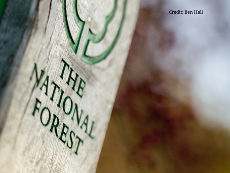 The National Forest - the perfect location for a UK electric bike holiday