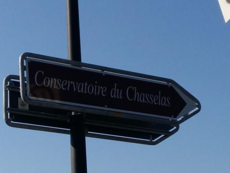 Un conservatoire en Lavaux