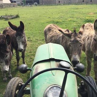 nos petits ânes
