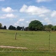 le champs de la chouette